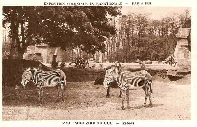 Parc Zoologique de Vincennes - Zèbres - Exposition Coloniale Paris 1931