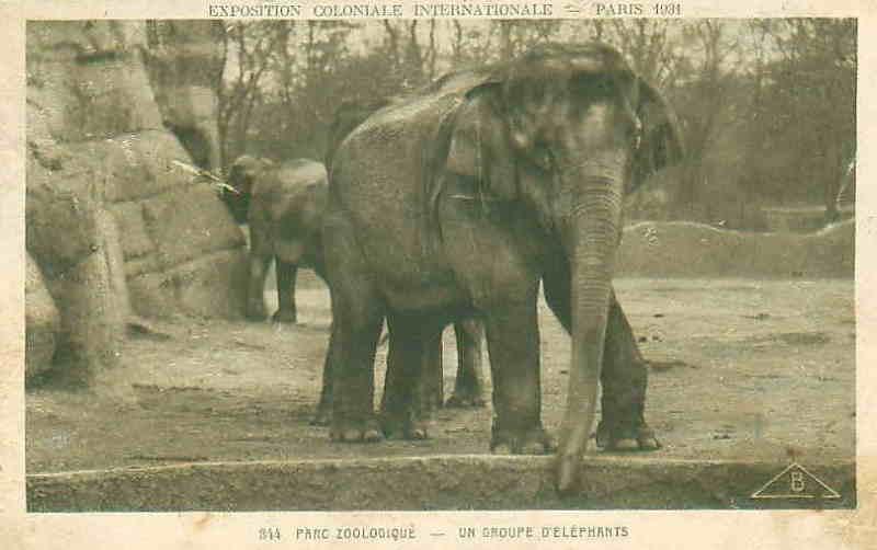 Parc Zoologique de Vincennes - Eléphants - Exposition Coloniale Paris 1931