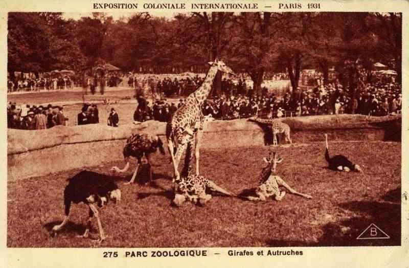 Parc Zoologique de Vincennes - Girafes et Autruches - Exposition Coloniale Paris 1931