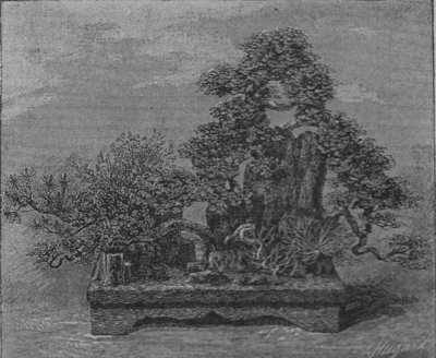 Paysage formé de Pins, Thuyas, etc..., plantés sur des troncs de fougères